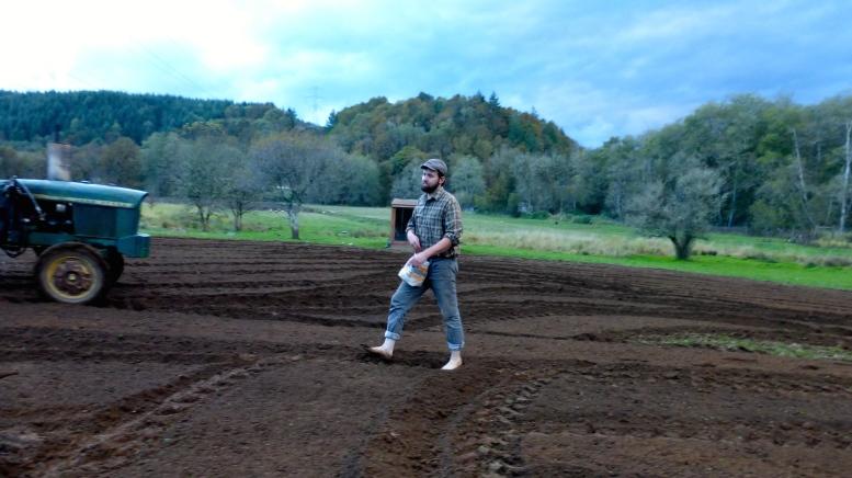 Daddy planting mustard