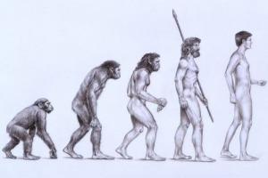 popular-evolution-chart