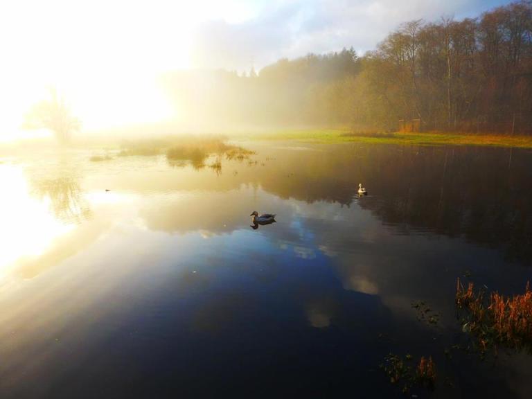 Audrey's duck pond